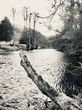 Chilly Monnow