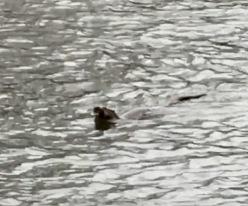 Playful Otter
