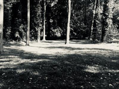 IMG_1339