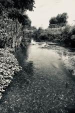 Wiltshire Avon