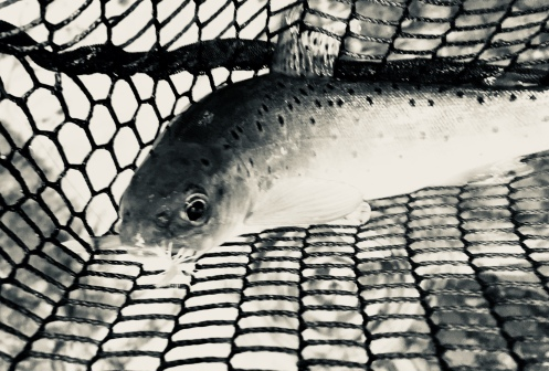 River Edw Brownie